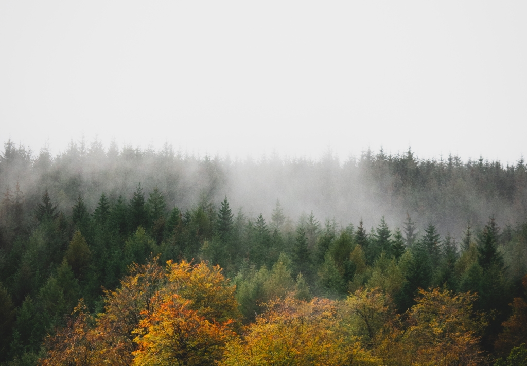 Low lying mist over forest